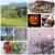 Black Forest Impressionen