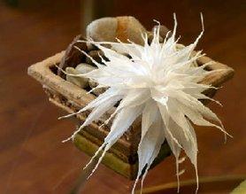 Blütenzauber aus Papier