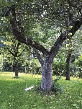Apfelbaum mit Schaukel