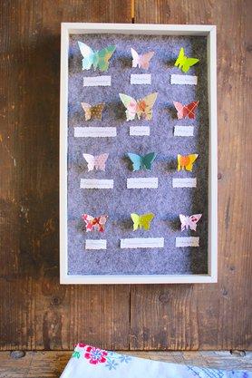 Schmetterlingsschaukasten