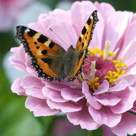 ...zurück im bei Zinien und Schmetterlingen