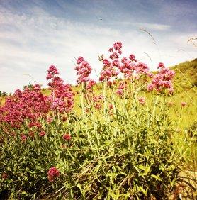 Viel los am Spornblumenstrauß