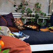 Farbverliebtes auf dem Gartenbett