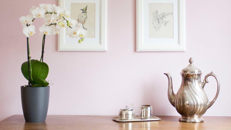 Die Schönsten Orchideen Deko Ideen