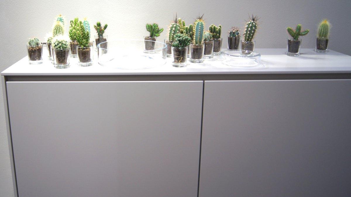 Imm cologne 2016 wohntrends und solebich messetreffen for Zimmerpflanzen trend 2016