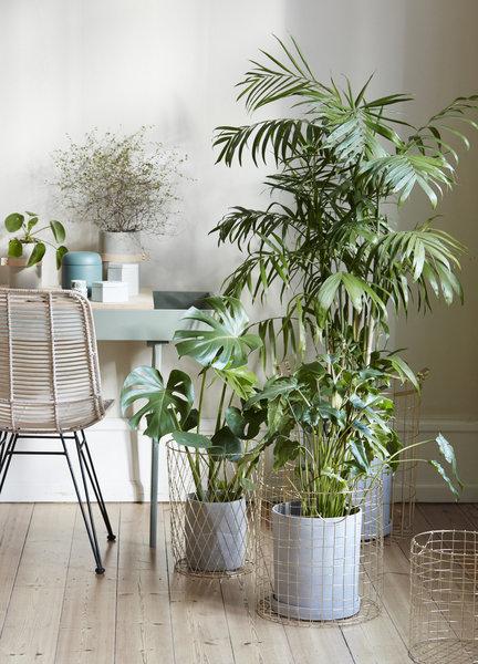 Einrichten und dekorieren im fr hjahr und sommer for Zimmerpflanzen trend 2016