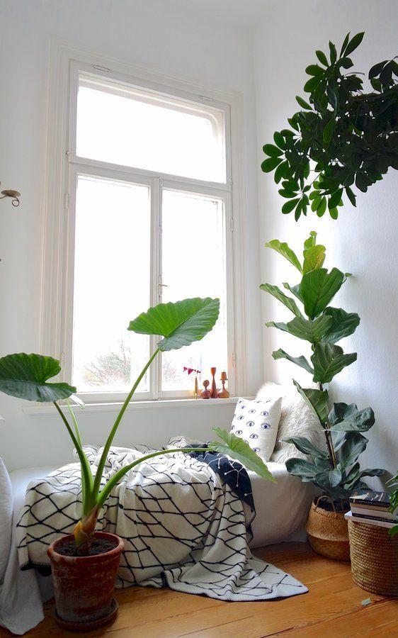 Atemberaubend Was das Herz begehrt... Heute: Zimmerpflanzen & wie sie überleben @JM_59