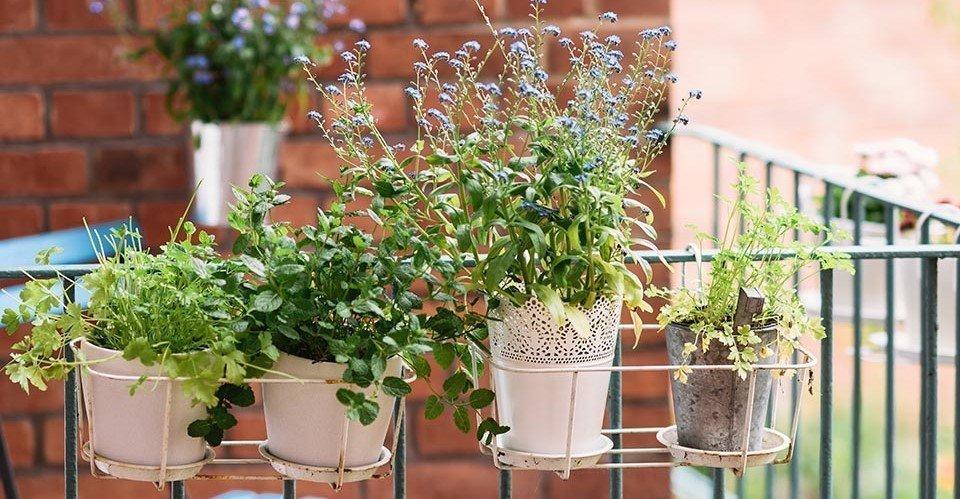 Außergewöhnlich Balkonpflanzen – die besten Tipps und Tricks | SoLebIch.de #XT_55