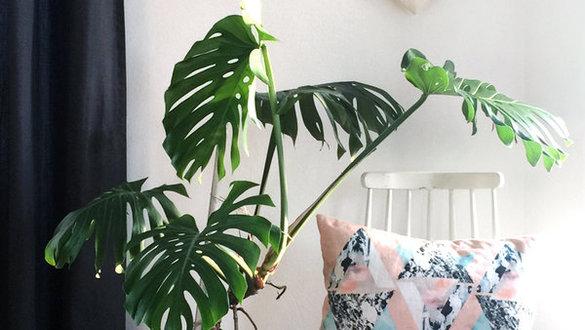 Zimmerpflanzen deko ideen for Pflanzen bestellen berlin
