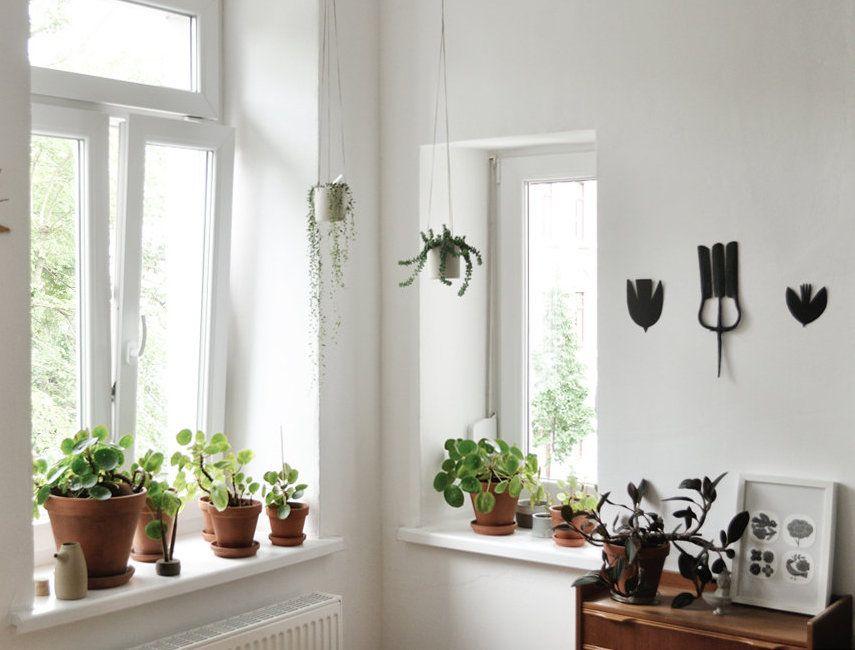 was das herz begehrt heute zimmerpflanzen wie sie. Black Bedroom Furniture Sets. Home Design Ideas