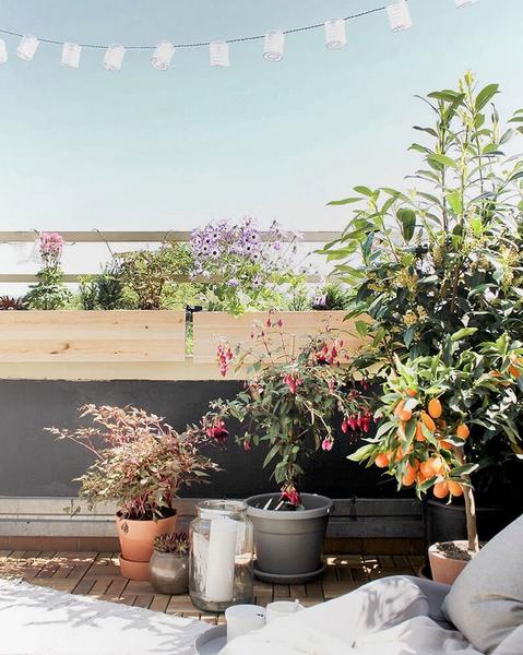 Etwas Neues genug Balkonpflanzen – die besten Tipps und Tricks | SoLebIch.de &DL_12