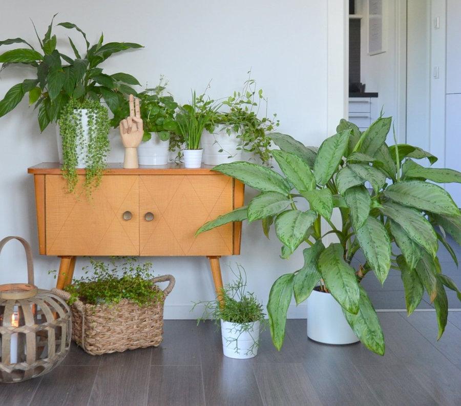 Die besten pflegeleichten Zimmerpflanzen & Indoor Pflanzen
