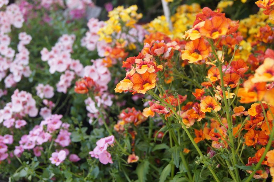 Blumen Nach Farben: Was Passt Zu Gelb Und Orange