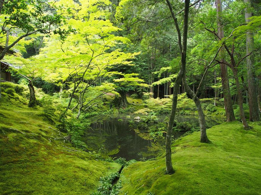 Mit mywe nach kanazawa und kyoto in japan - Moosgarten kyoto ...