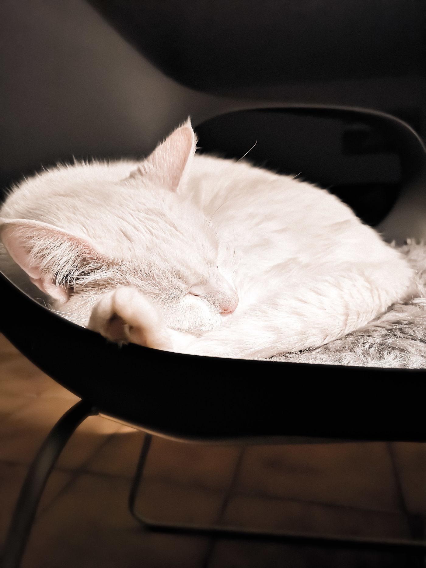 Weihnachtskalender Von Violetta.Katzen Bilder Tipps Seite 81