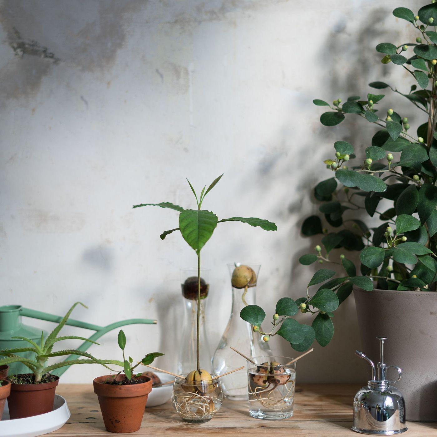 Die Schonsten Pflanzen Deko Ideen Seite 142