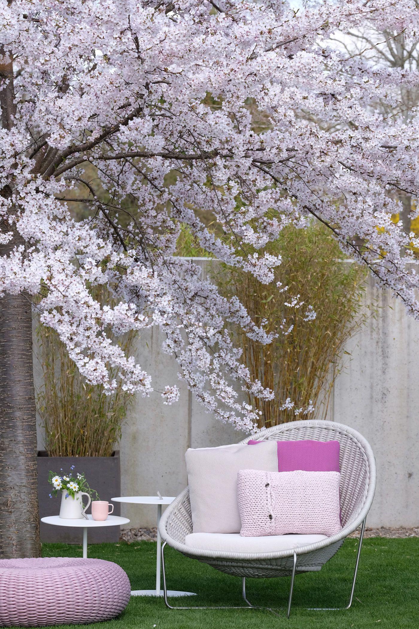Altrosa pink rosa for Mediterrane garten gestalten