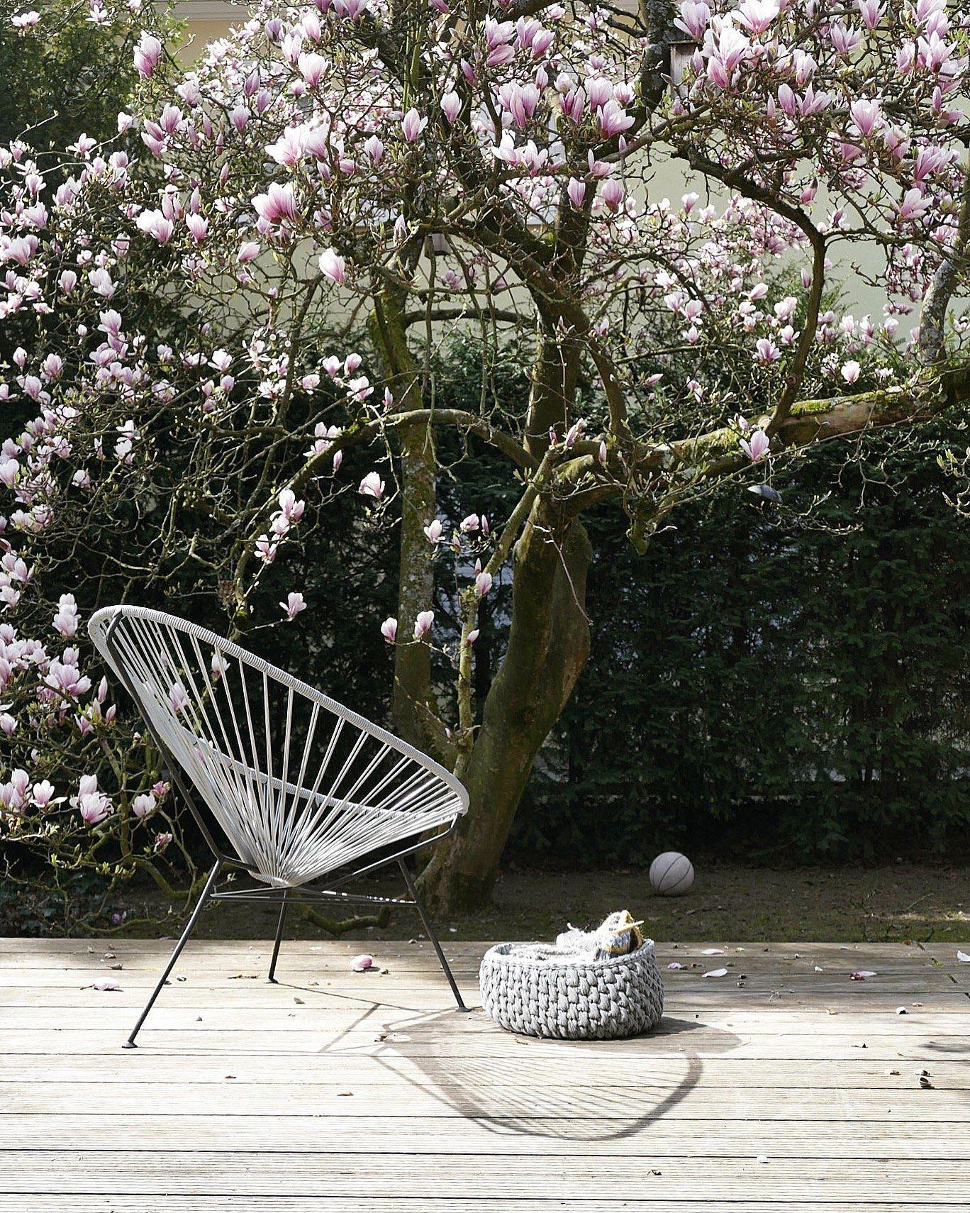 Ungewöhnlich Leicht Hausbar Plant Kostenlos Zeitgenössisch - Images ...