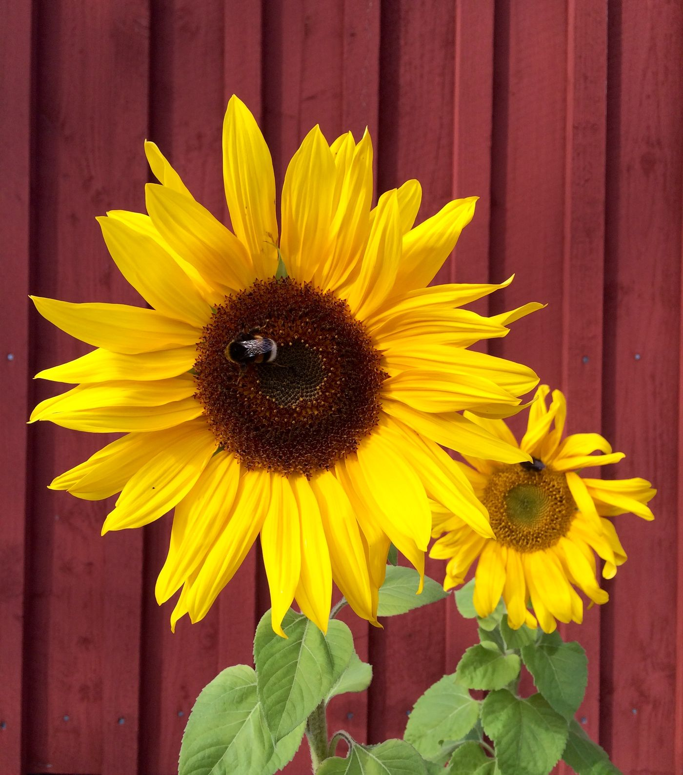 Die Schönsten Sonnenblumen Deko Ideen Seite 11