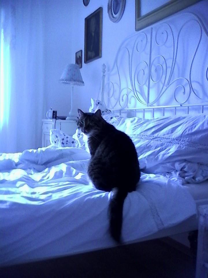 neue ideen frs bett perfect ikea mbel pimpen luxus bett. Black Bedroom Furniture Sets. Home Design Ideas