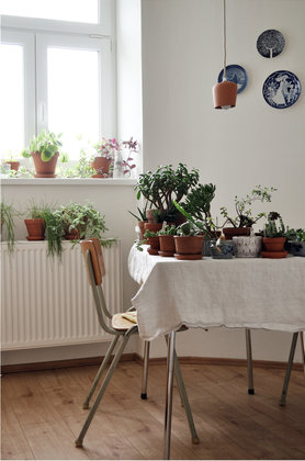deko ideen mit sukkulenten. Black Bedroom Furniture Sets. Home Design Ideas