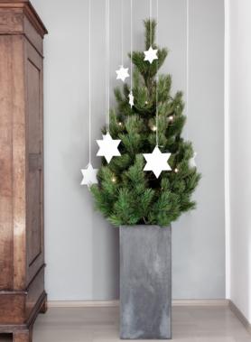 Christbaumschmuck basteln ideen bilder - Weihnachtsbaum kiefer ...